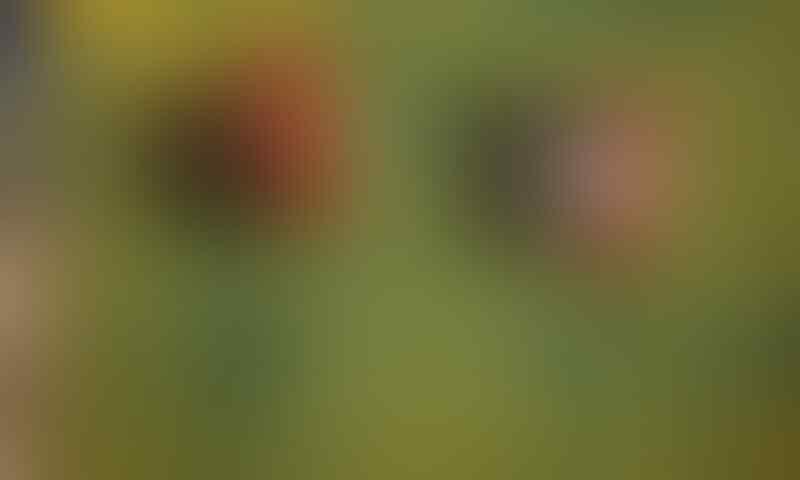<Lelang Area> Special Item House (mustika,Spirit,ajimat,item,dsb) [A.R]