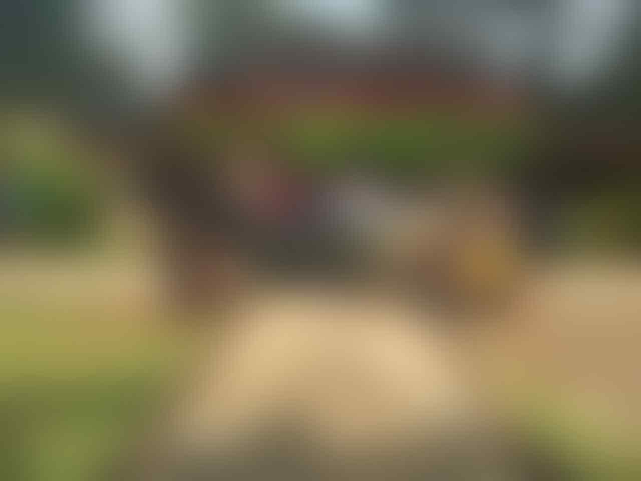 [ANYONE] ALL NEW YARIS INDONESIA CLUB