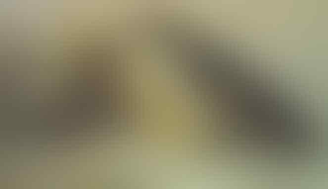 5 Fakta Tentang Persetubuhan Orang-Orang Purba yang Bikin Geleng Kepala