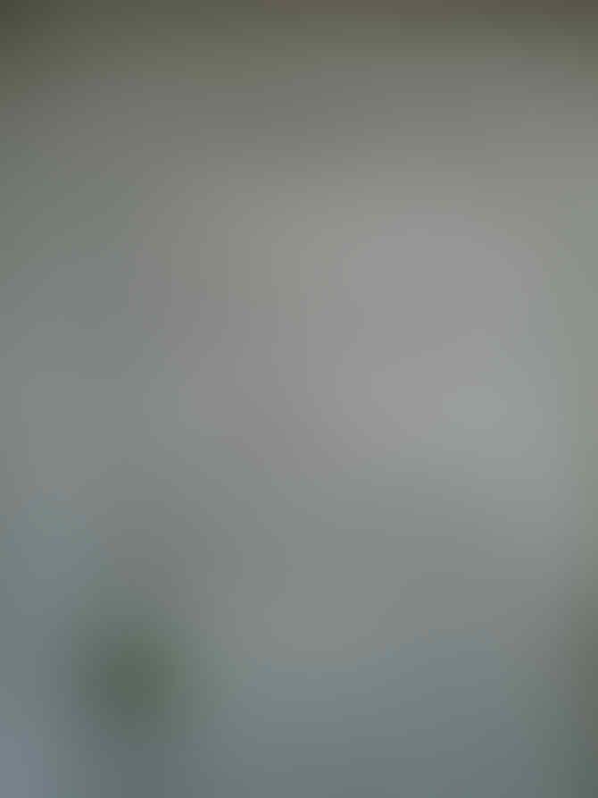 Gila,Punya Satu Tokek Rumah Udah Jadi Milyarder,Lihat Tokek Ini Dihargai Rp 150M