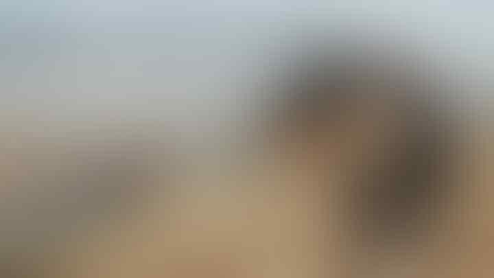 Coming Soon! 5 Senjata Pindad Ini Bakal Ada di PUBG