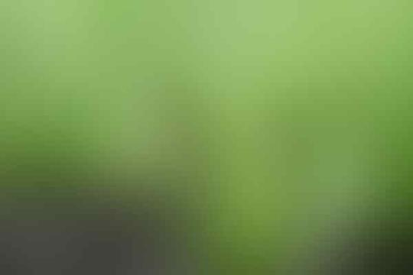 Macam-Macam Tanaman Holtikultura (bernilai ekonomis tinggi)