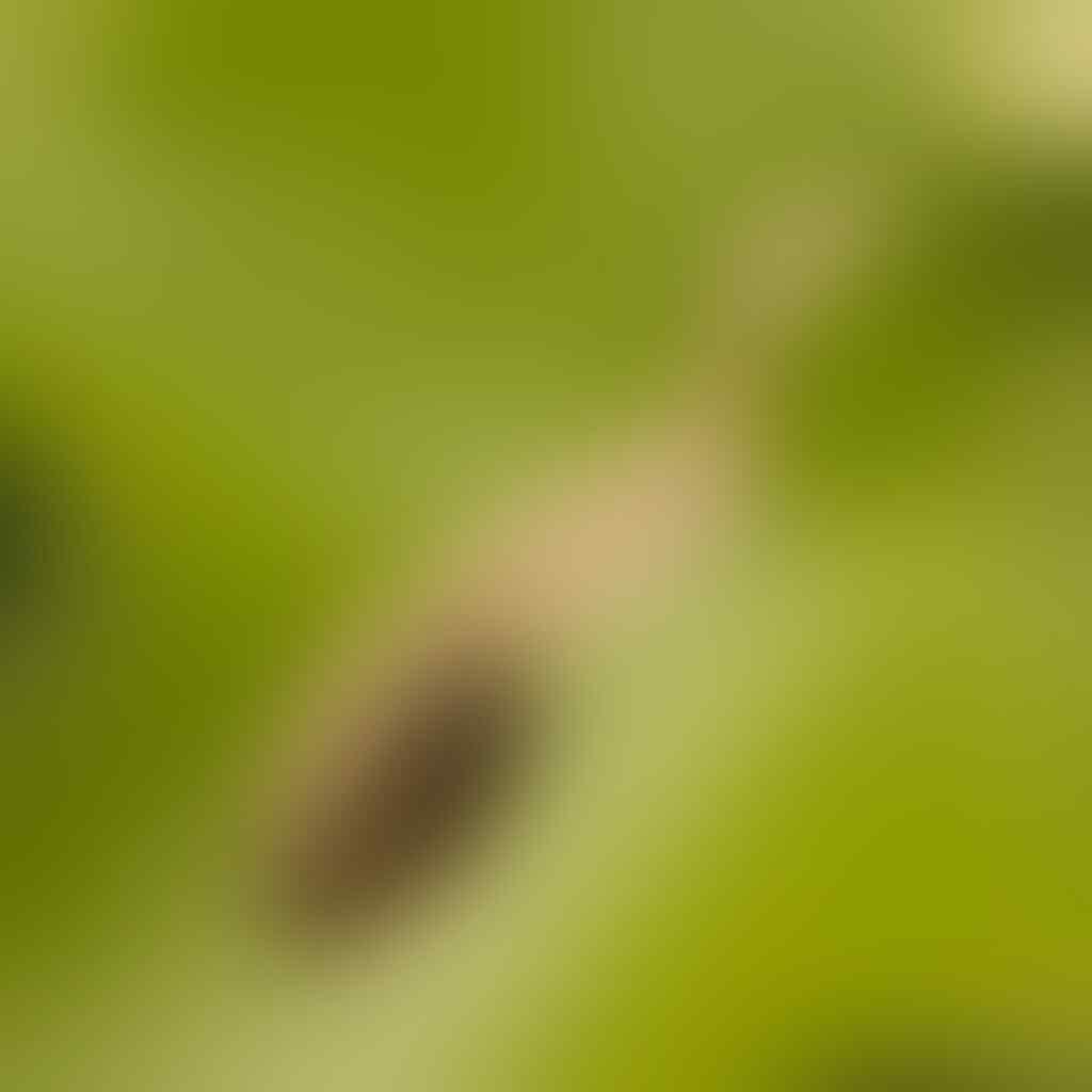5 Hewan Imut yang jarang kita ketahui. Ga percaya ? Liat aja yang nomor 2