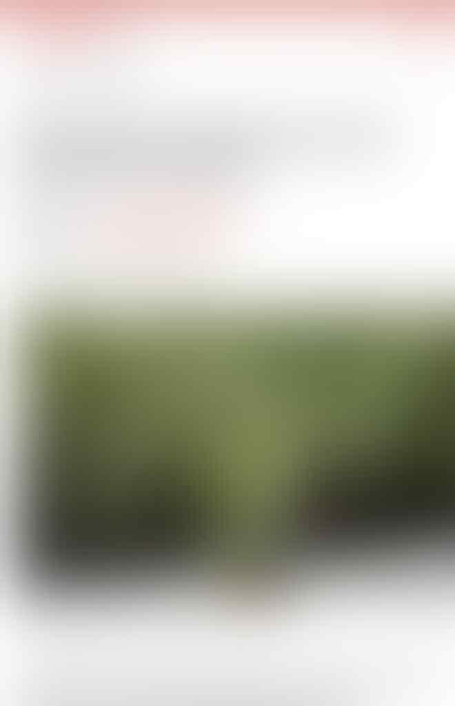 """Perkenalkan """"Hutan Vertikal"""", Solusi Untuk Polusi di Jakarta"""