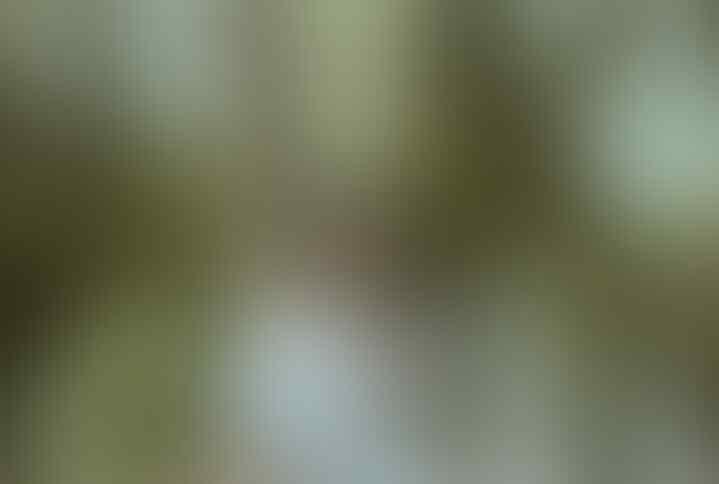 [Kisah Nyata] Misteri Hitungan Ganjil Di Gunung Marapi