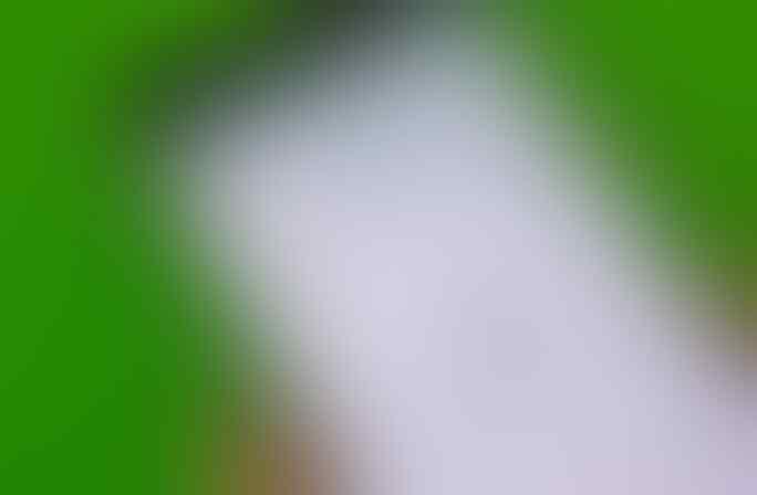 3 Cara Membuka WhatsApp Yang Terkunci Sidik Jari Tanpa Harus Scan Sidik Jari