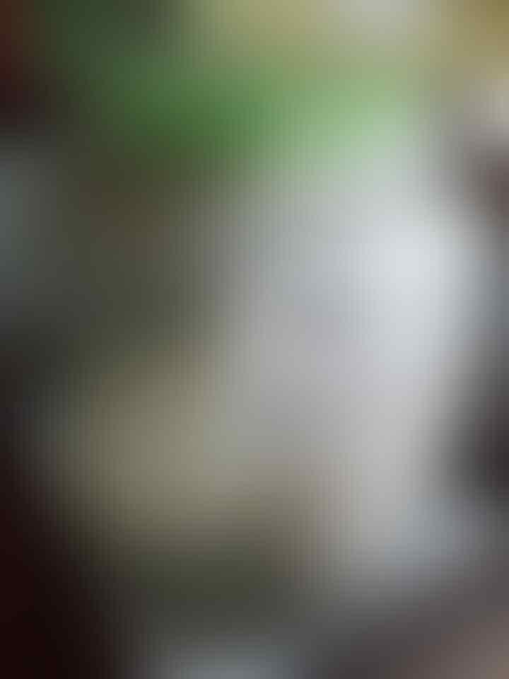 Intip Penangkaran Buaya di Asam Kumbang Medan Sumut Yuk, Ada Buaya Buntungnya Lho ...