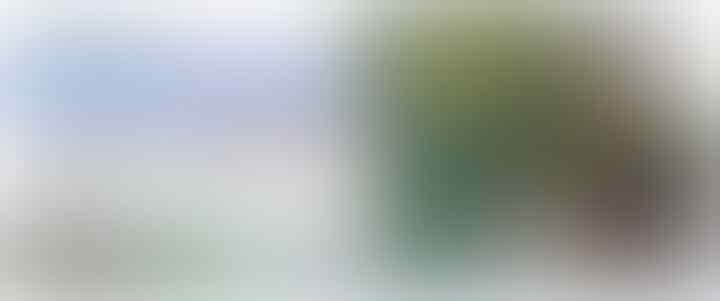 Ditanya Keberadaan Pohon Monas yang Ditebang, Sekda DKI: Saya Mana Tahu