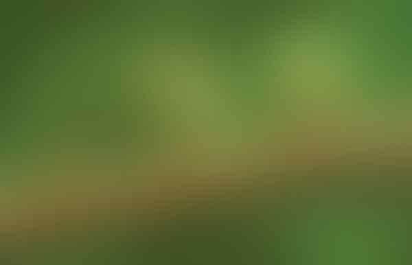 5 Fakta Menarik Atta, Semut Pemotong Daun