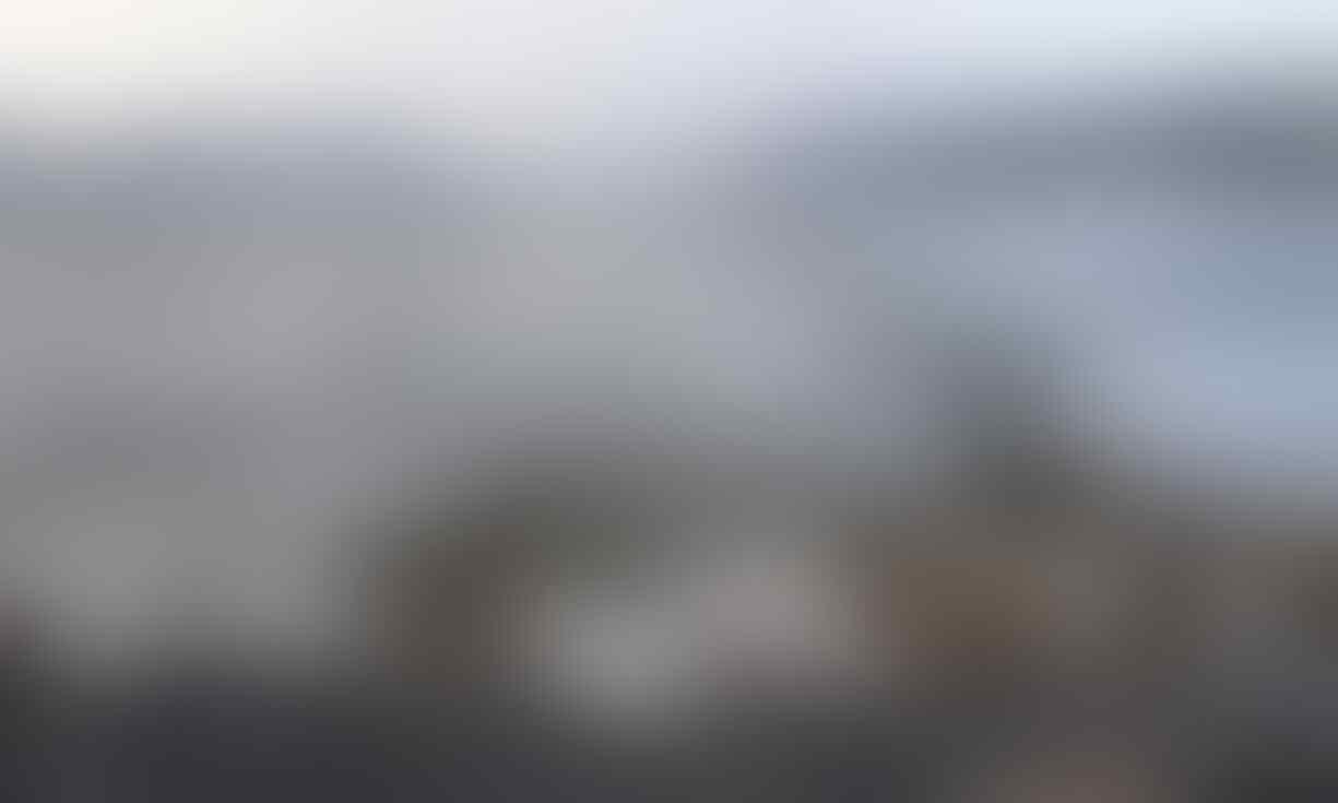 'Gumpalan panas' menewaskan hampir 1 juta burung laut