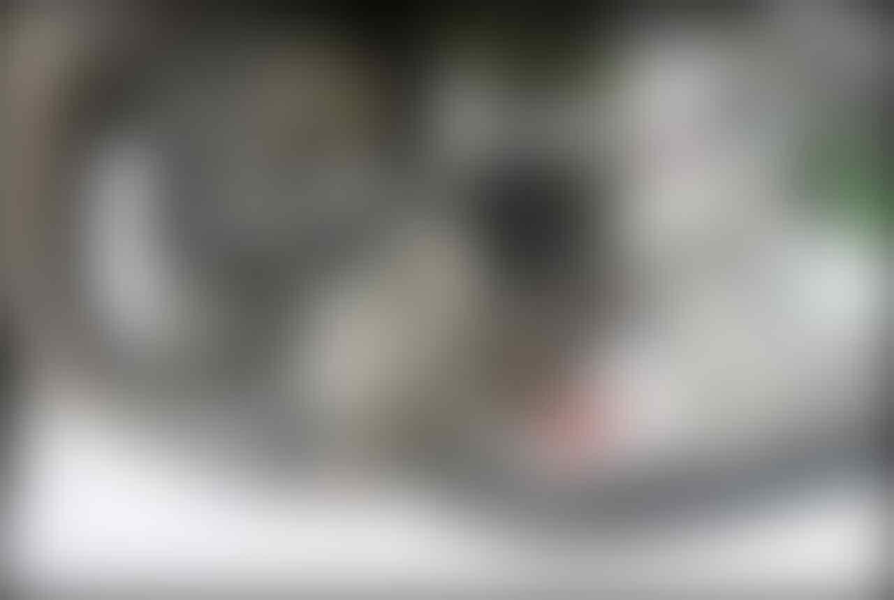Motor Balap GP Kawasaki Jadul, Mesinnya Aneh Banget Punya Konfigurasi V Kebalik
