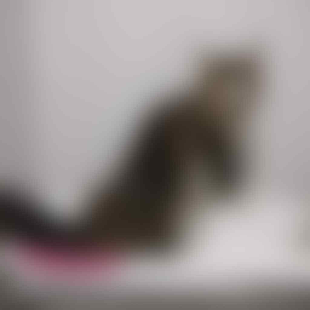 Cara Perawatan Kucing Bulu Panjang