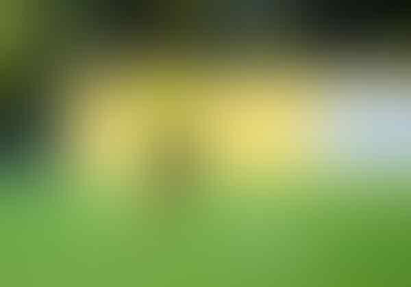 Sancho Lebih Baik Dari Messi dan Ronaldo Sebelum Usia 20 Tahun