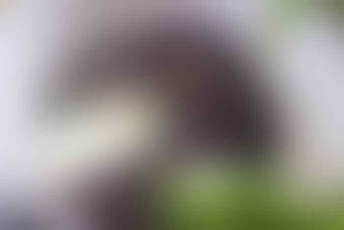#mumpungdirumah, Menanam Bawang Putih Ternyata Mudah Gan Sis!