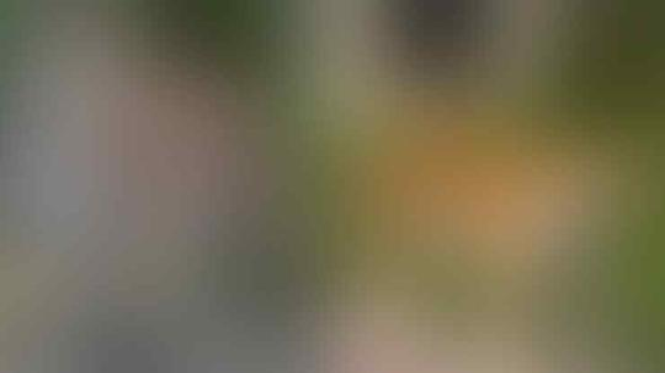Keren Parah, Parfum Calvin Klein Buat Menjinakkan Harimau di Kebun Binatang Ini!