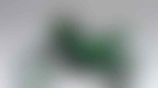 Simak 7 Fakta Belalang Sembah, Salah Satunya Mampu Memakan Otak Burung