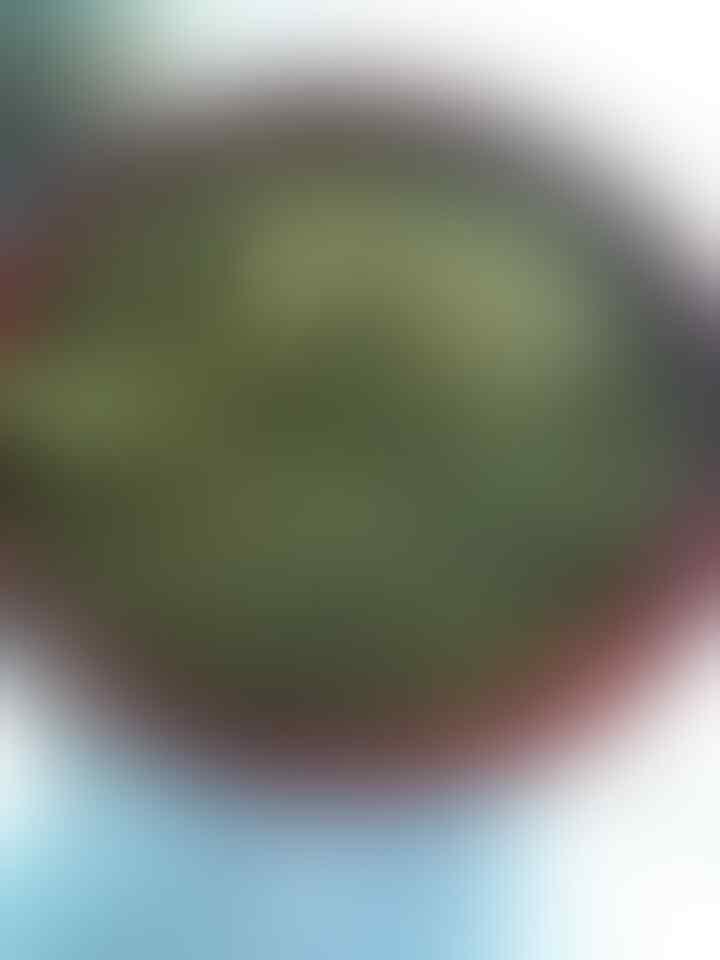 Apa itu buah tin? Jenis buah tin nomer 9 yang bikin takjub.