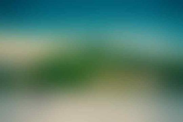 [Coc Reg. Batam] Aneka Olahan Batam dari Binatang Laut