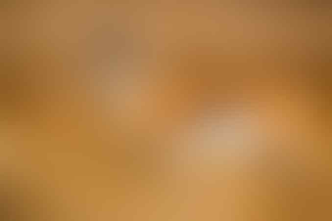 6 Hewan Tercepat di Daratan, Nomor 1 Gila Kecepatan hingga 225 Kmh Cheetah Kalah Jauh