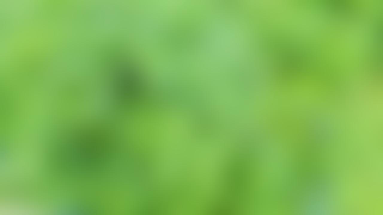 KEMBANG TELANG | SI BIRU BANYAK MANFAAT