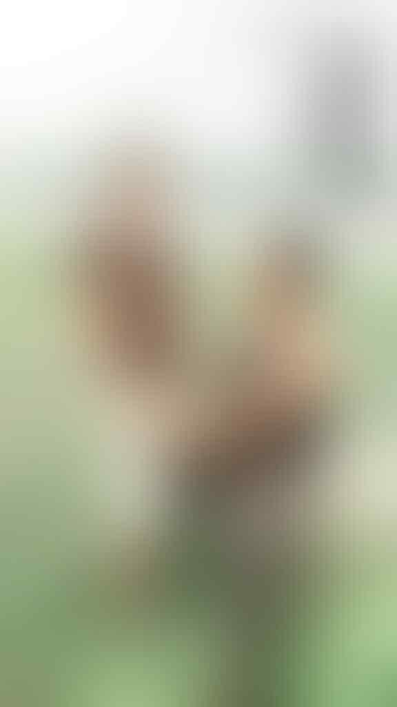 2 Pria Diduga Pasangan GAY Tepergok MESUM di Pura Beji Ubud
