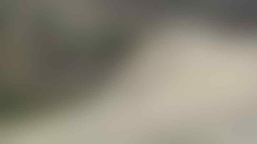Aligator Master: 'Si Buaya' Dari Eropa Timur, Keluarga Baru Korps Marinir TNI AL