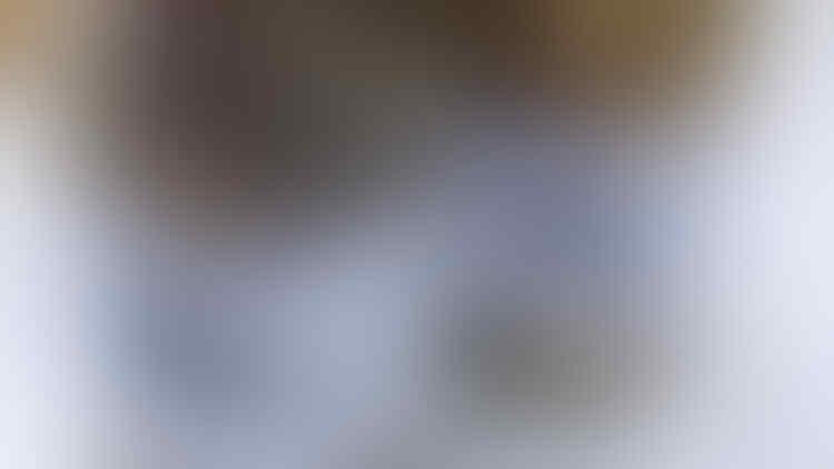 1 Toples 87 Ribu! Di Tengah Corona Bisnis Kotoran Singa Laris Manis, Untuk Apa?
