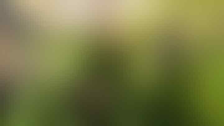 Tips Menyulap Pekarangan Sempit Menjadi Kebun Aneka Sayuran