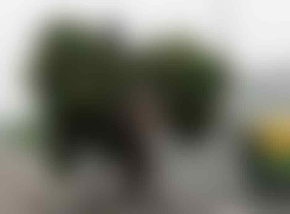 Pemilik Gajah Piara Terakhir Nyerah di Delhi India.
