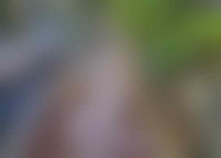 [COC Reg. Klaten] Watergong Klaten, Layaknya Monet's Pond di Jepang yang Viral