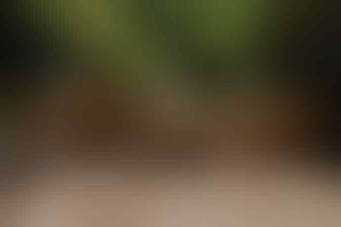 """(Coc Reg.Bali)""""BARONG BRUTUK"""" Tarian Legenda Desa Trunyan, Pemilik 'MAKAM EKSTRIM'?"""