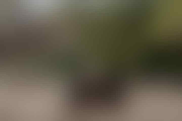 Kendaraan Berat Diduga Masuk Habitat Komodo, Forum Pariwisata Boikot Labuan Bajo