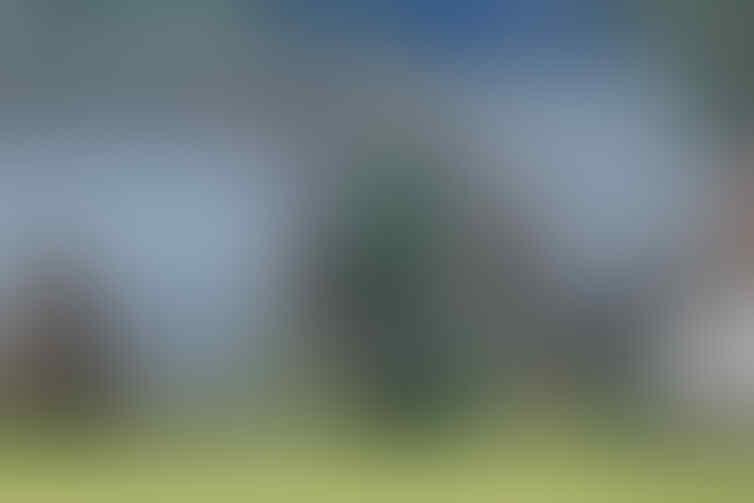 Profil Francesco Caputo, Ujung Tombak Semenjana yang buat Terpana