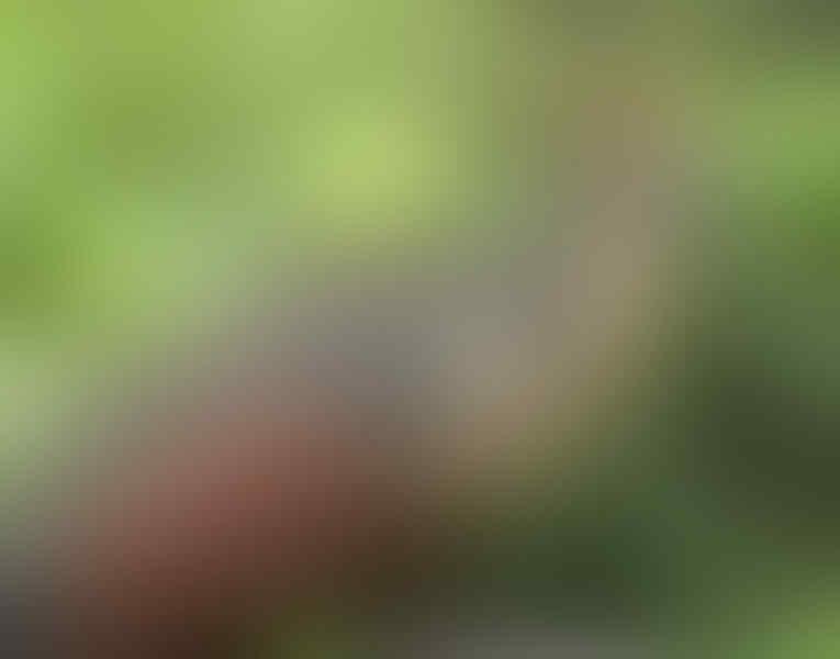 Ada Ikan Kecil Yang Ditakuti, Inilah Hewan Aneh Dan Unik Yang Tinggal Di Hutan Amazon