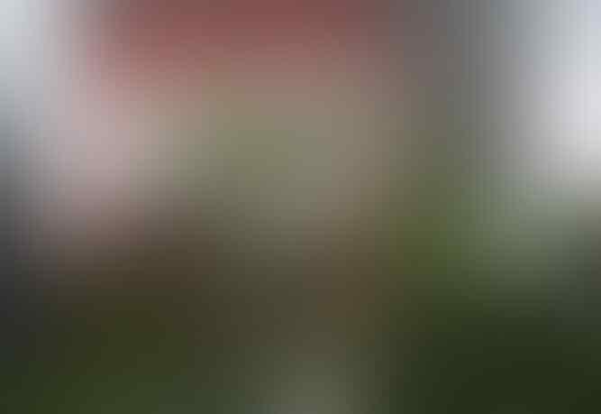 Ruhut Sitompul: Rizieq Shihab Jangan Merasa Kebal Hukum, Dia Itu Siapa?