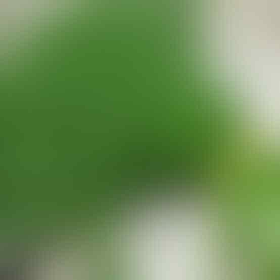 Jangan Mengaku Tim Penyuka Bubur, Kalau Belum Tahu 10 Macam Bubur Khas Nusantara Ini
