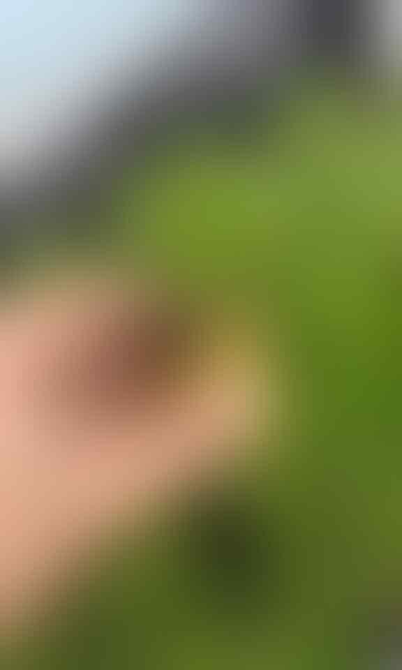 Berbagai Cara Menyemai Kangkung dengan Mudah Bisa Dilakukan Sendiri