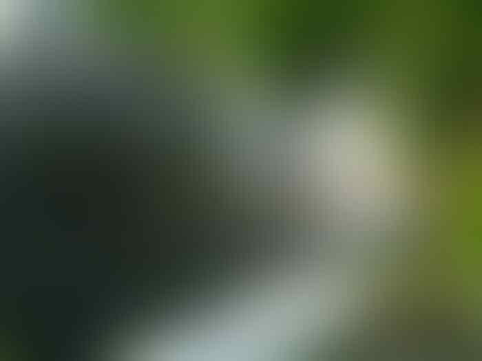 Gugatan Adiyanto Dikabulkan, Antam Harus Bayar 43 Kg Emas