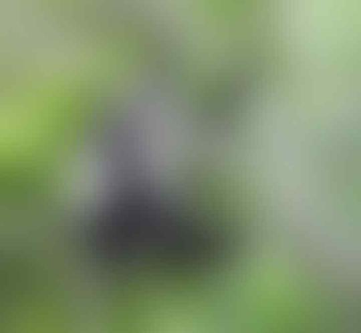[COC Reg. Banten Kulon] Hewan-hewan Langka yang Ada di Ujung Kulon