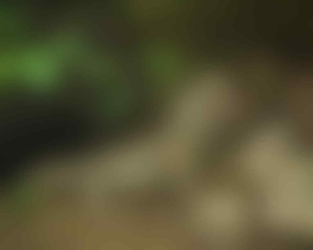 5 Fakta Menarik Tuatara, Reptil Endemik Selandia Baru