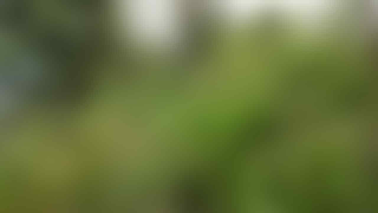 [Kisah Horor – Based On My True Story] Pendakian Gn. Sumbing - Wonosobo