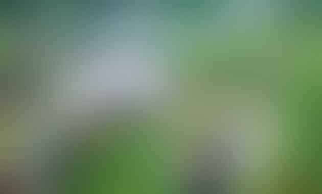 Asyiknya Berbulan Madu di The Le Hu Garden Medan