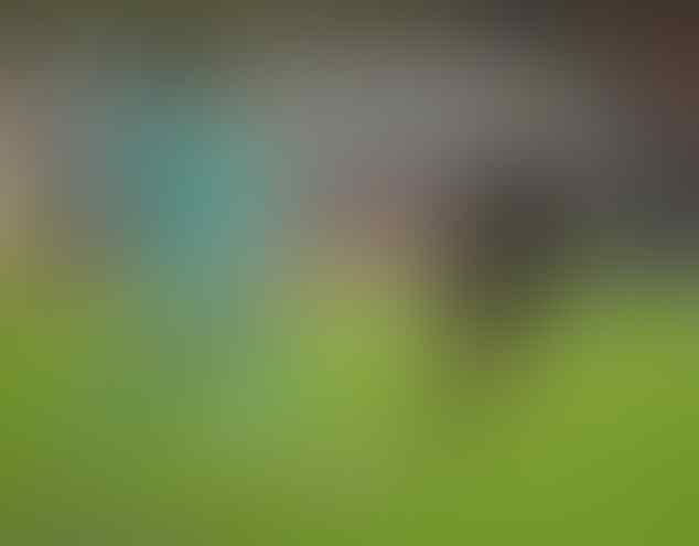 Wijnaldum optimis kemenangan lawan Sheffield kembalikan performa Liverpool