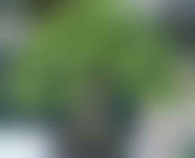 Jusuf Kalla Bongkar Fakta Mengejutkan Soal Habib Rizieq