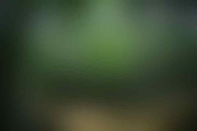 Menciptakan Kawasan Hijau Dengan Inovasi Eco Park Di Samurangau