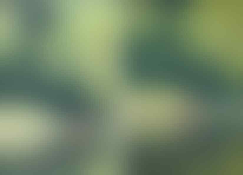 Serem ! Lagi Ngerekam Video, Eh Muncul 'SOSOK' Bigfoot Raksasa Berjalan Di Sungai !
