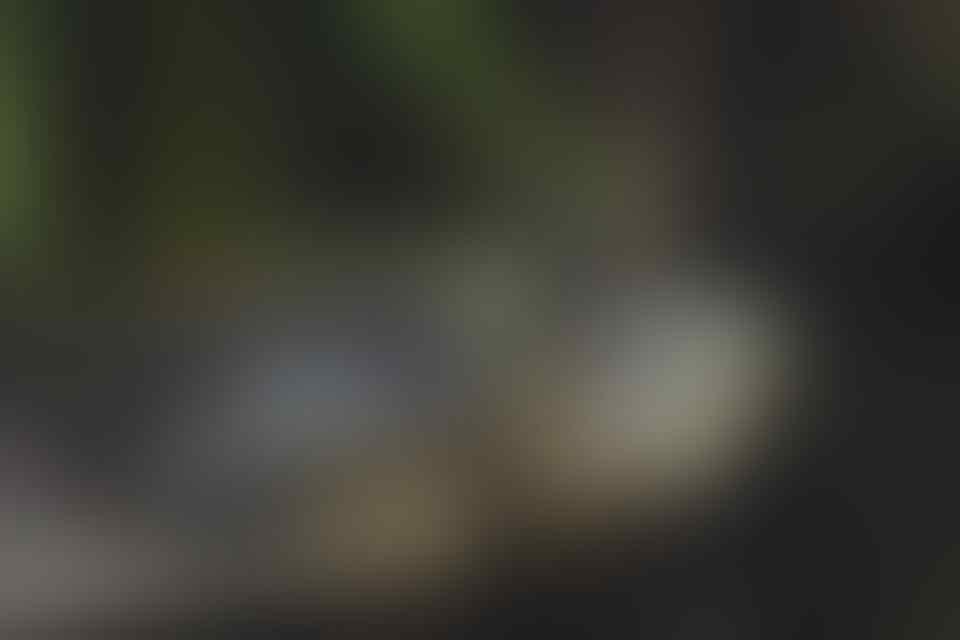 Mau Pelihara Hewan Tapi Males Ribet? 5 Jenis Hewan ini Mudah Untuk Dipelihara