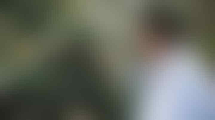 Penyebab 2 Harimau Terpapar Corona Masih Misterius, Diduga Lewat Udara
