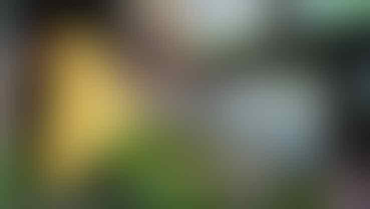 Melihat Kinerja Wasit yang Tak Memuaskan! Apakah Liga Indonesia Harus Menerapkan VAR?