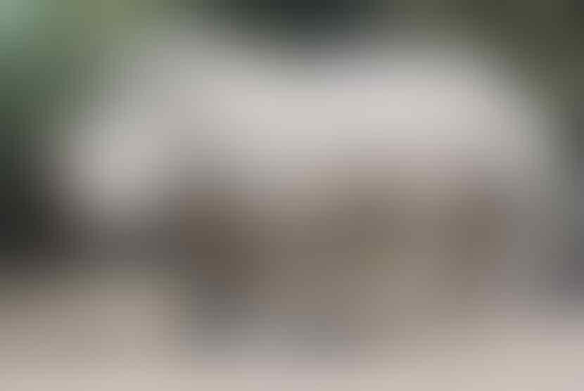 5 Jenis Badak yang di Lindungi Di Dunia| 22 September hari badak sedunia